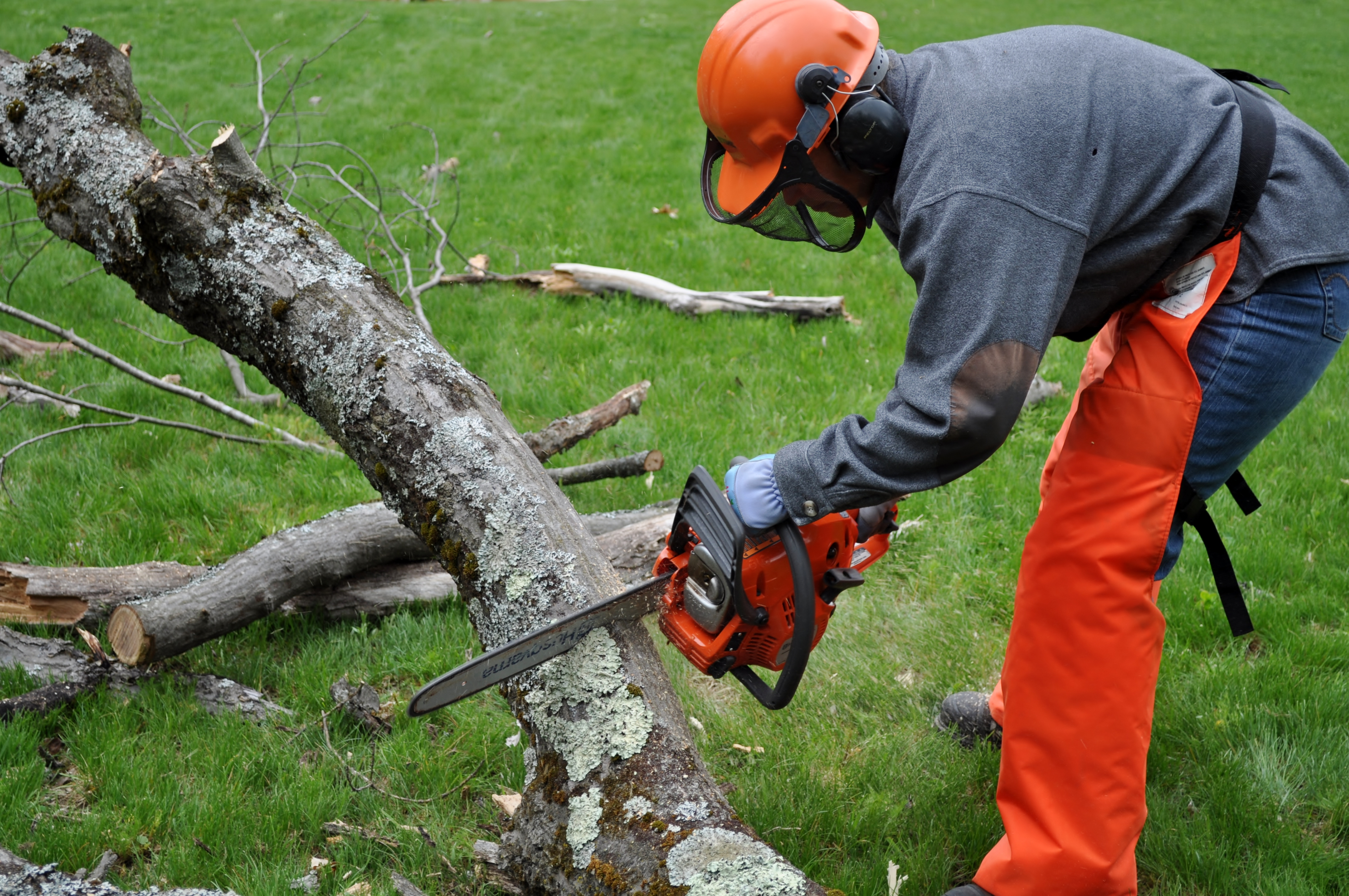Cutting A Tree : The oak tree came down and why my dad never needed to do