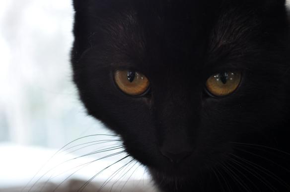 Freya's eyes (2)